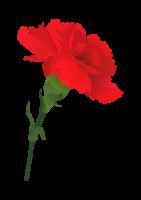 K Mezinárodnímu dni žen neodmyslitelně patří karafiáty nebo růže